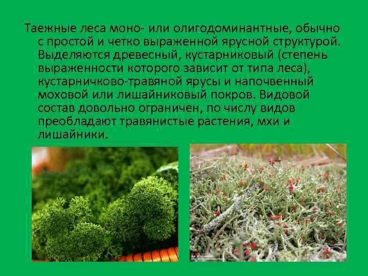 Таежные леса моно- или олигодоминантные, обычно с простой и четко выраженной ярусной структурой. Выделяются