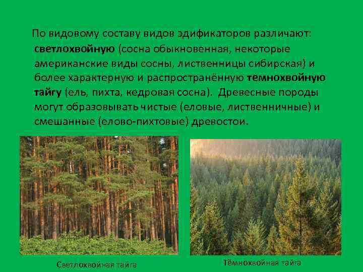 По видовому составу видов эдификаторов различают: светлохвойную (сосна обыкновенная, некоторые американские виды сосны, лиственницы