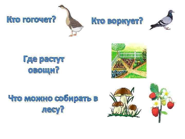 Кто гогочет? Кто воркует? Где растут овощи? Что можно собирать в лесу?
