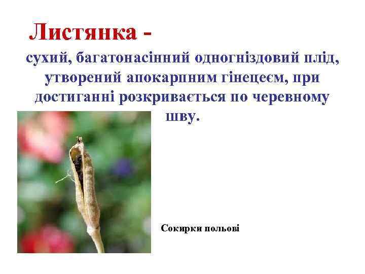 Листянка сухий, багатонасінний одногніздовий плід, утворений апокарпним гінецеєм, при достиганні розкривається по черевному шву.