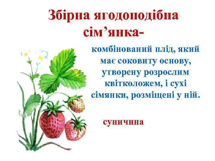 Збірна ягодоподібна сім'янкакомбінований плід, який має соковиту основу, утворену розрослим квітколожем, і сухі сімянки,