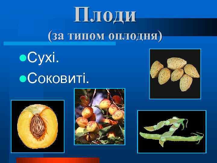 Плоди (за типом оплодня) l. Сухі. l. Соковиті.