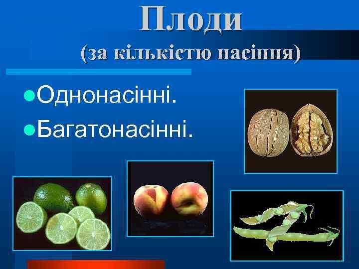 Плоди (за кількістю насіння) l. Однонасінні. l. Багатонасінні.