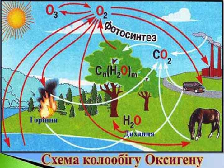 Колообіг Оксигену в природі Кисень та озон