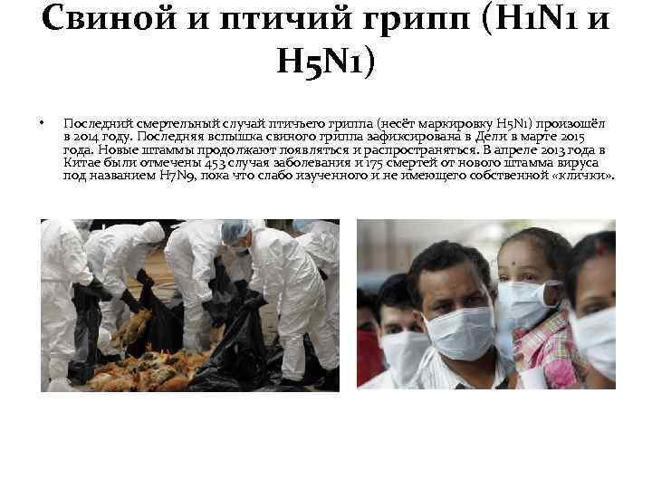 Cвиной и птичий грипп (H 1 N 1 и H 5 N 1) •