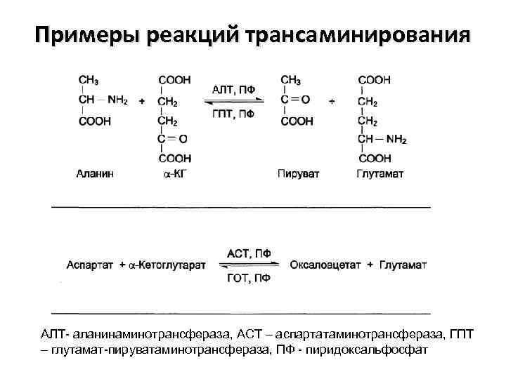 Примеры реакций трансаминирования АЛТ- аланинаминотрансфераза, АСТ – аспартатаминотрансфераза, ГПТ – глутамат-пируватаминотрансфераза, ПФ - пиридоксальфосфат