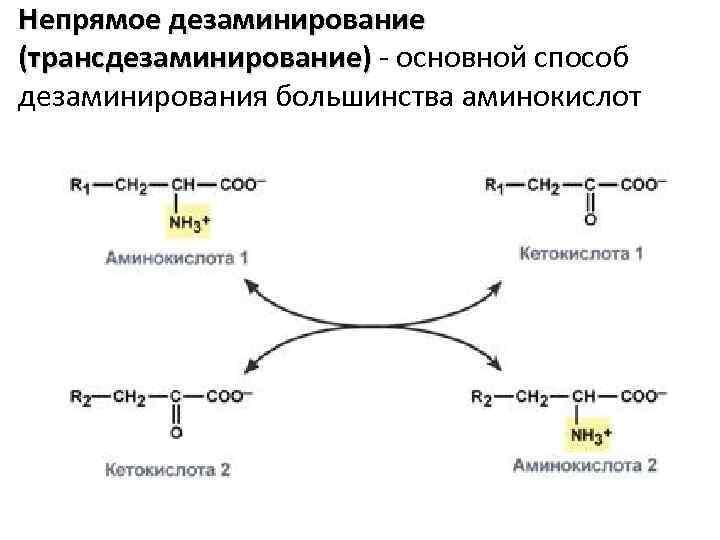 Непрямое дезаминирование (трансдезаминирование) - основной способ дезаминирования большинства аминокислот
