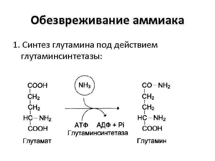 Обезвреживание аммиака 1. Синтез глутамина под действием глутаминсинтетазы: