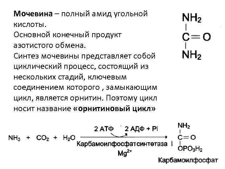 Мочевина – полный амид угольной кислоты. Основной конечный продукт азотистого обмена. Синтез мочевины представляет