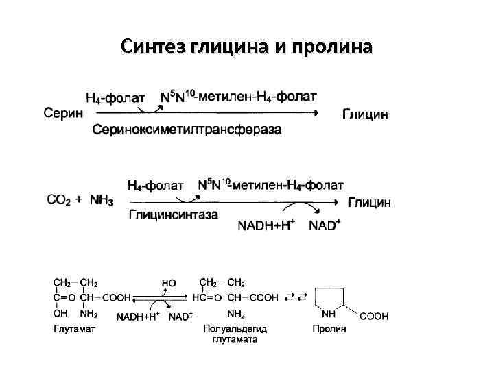 Синтез глицина и пролина