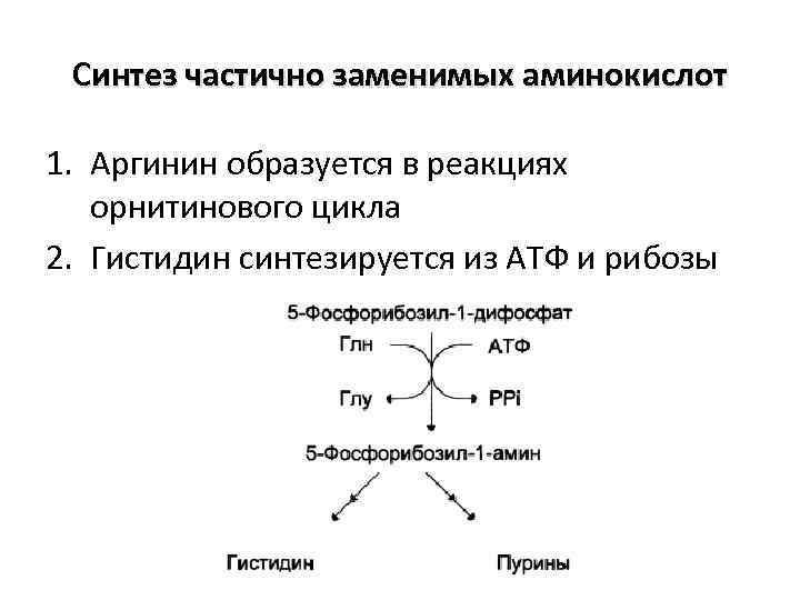 Синтез частично заменимых аминокислот 1. Аргинин образуется в реакциях орнитинового цикла 2. Гистидин синтезируется
