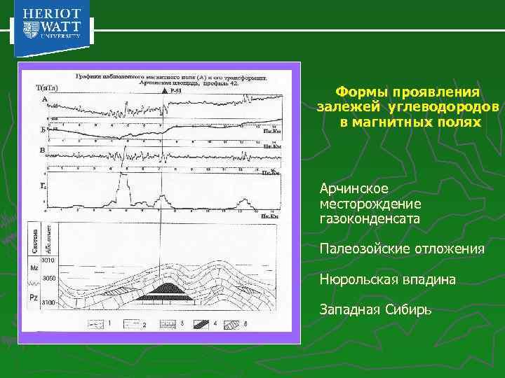 Формы проявления залежей углеводородов в магнитных полях Арчинское месторождение газоконденсата Палеозойские отложения Нюрольская впадина