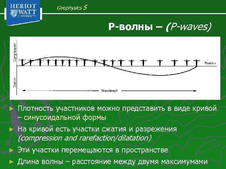Geophysics 5 Р-волны – (P-waves) ► Плотность участников можно представить в виде кривой –