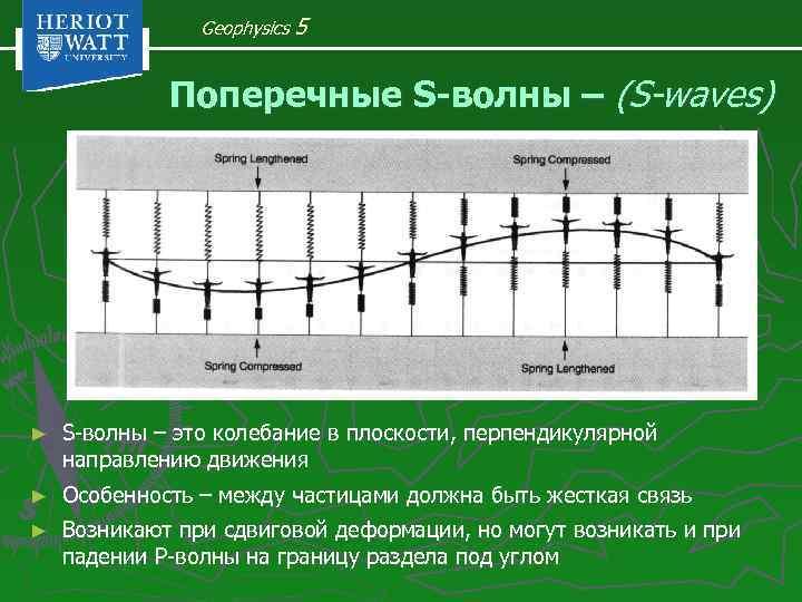 Geophysics 5 Поперечные S-волны – (S-waves) ► S-волны – это колебание в плоскости, перпендикулярной