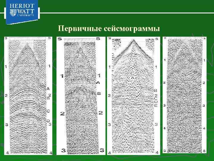 Первичные сейсмограммы