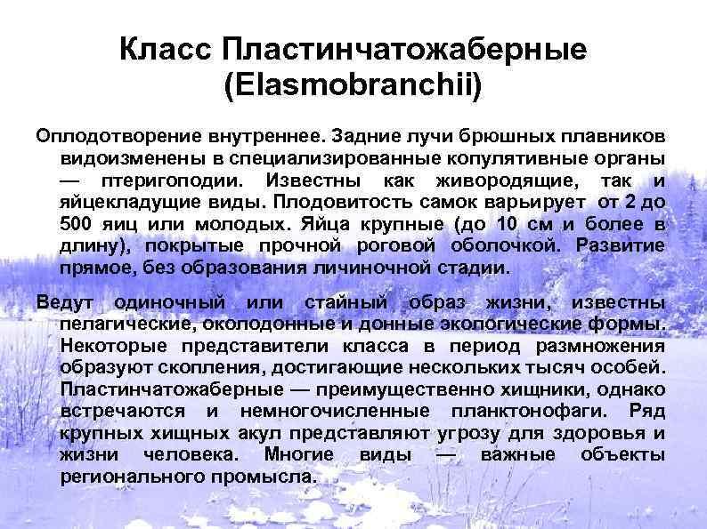 Класс Пластинчатожаберные (Elasmobranchii) Оплодотворение внутреннее. Задние лучи брюшных плавников видоизменены в специализированные копулятивные органы