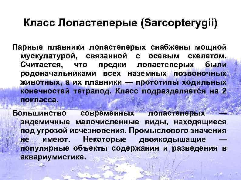 Класс Лопастеперые (Sarcopterygii) Парные плавники лопастеперых снабжены мощной мускулатурой, связанной с осевым скелетом. Считается,