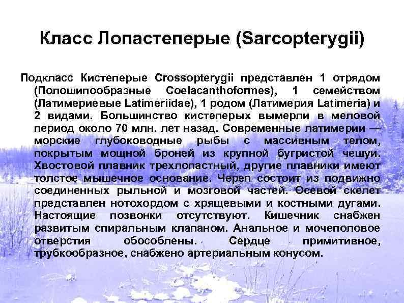 Класс Лопастеперые (Sarcopterygii) Подкласс Кистеперые Crossopterygii представлен 1 отрядом (Полошипообразные Coelacanthoformes), 1 семейством (Латимериевые