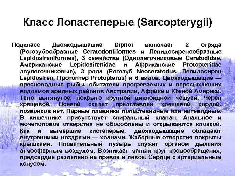Класс Лопастеперые (Sarcopterygii) Подкласс Двоякодышащие Dipnoi включает 2 отряда (Рогозубообразные Ceratodontiformes и Лепидосиренообразные Lepidosireniformes),
