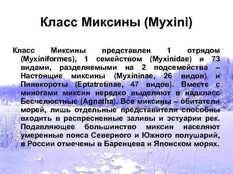 Класс Миксины (Myxini) Класс Миксины представлен 1 отрядом (Myxiniformes), 1 семейством (Myxinidae) и 73