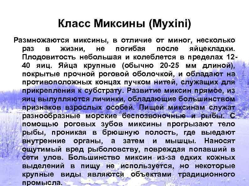 Класс Миксины (Myxini) Размножаются миксины, в отличие от миног, несколько раз в жизни, не