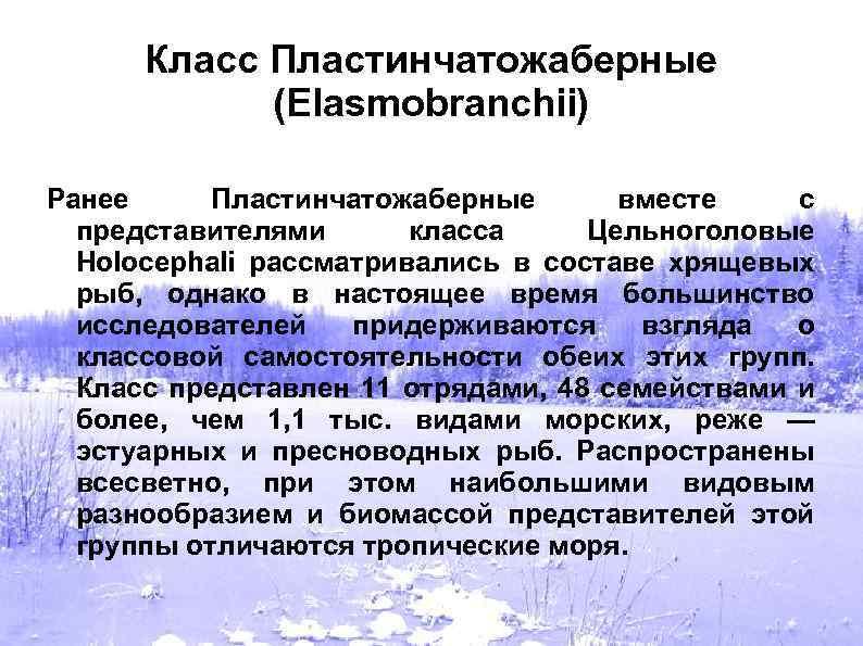 Класс Пластинчатожаберные (Elasmobranchii) Ранее Пластинчатожаберные вместе с представителями класса Цельноголовые Holocephali рассматривались в составе