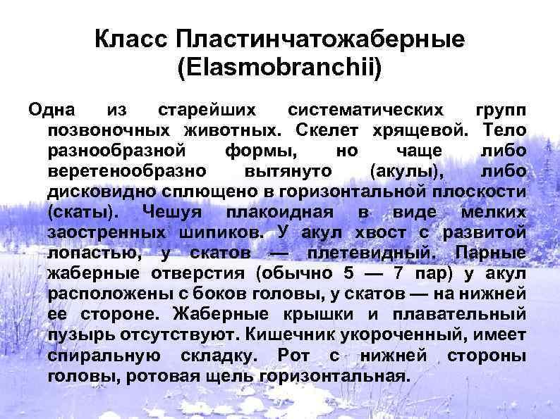 Класс Пластинчатожаберные (Elasmobranchii) Одна из старейших систематических групп позвоночных животных. Скелет хрящевой. Тело разнообразной