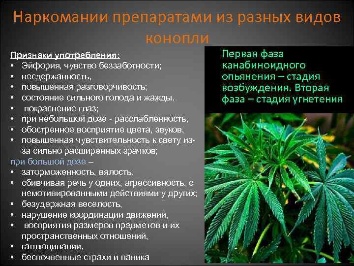 Симптом марихуана новые законы марихуана