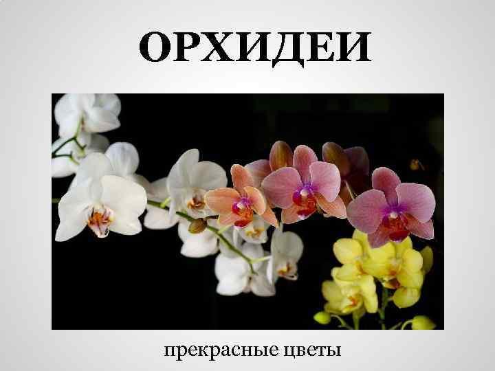 ОРХИДЕИ прекрасные цветы