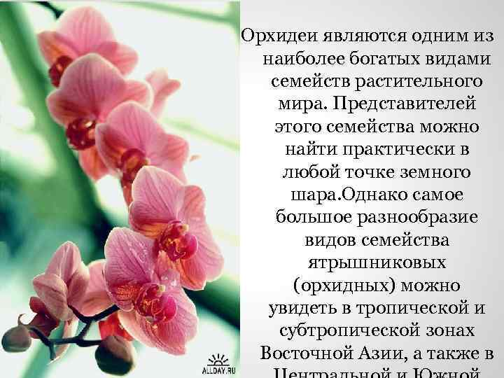 Орхидеи являются одним из наиболее богатых видами семейств растительного мира. Представителей этого семейства можно