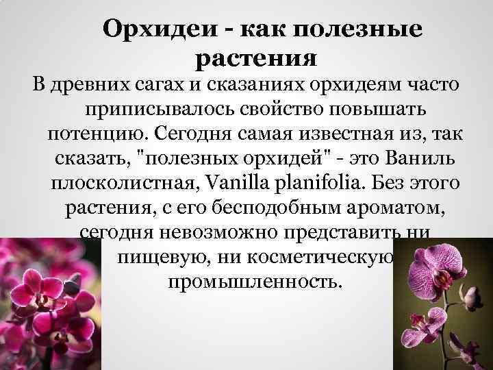 Орхидеи - как полезные растения В древних сагах и сказаниях орхидеям часто приписывалось свойство