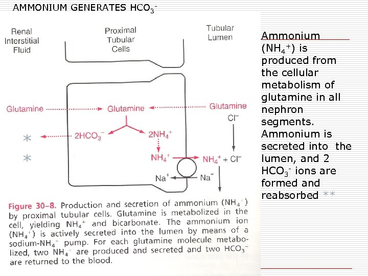 AMMONIUM GENERATES HCO 3 - * * Ammonium (NH 4+) is produced from the