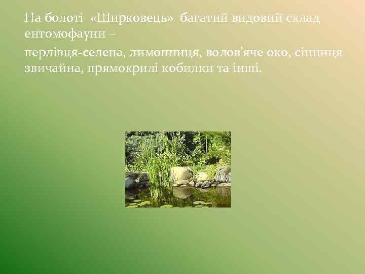 На болоті «Ширковець» багатий видовий склад ентомофауни – перлівця-селена, лимонниця, волов'яче око, сінниця звичайна,