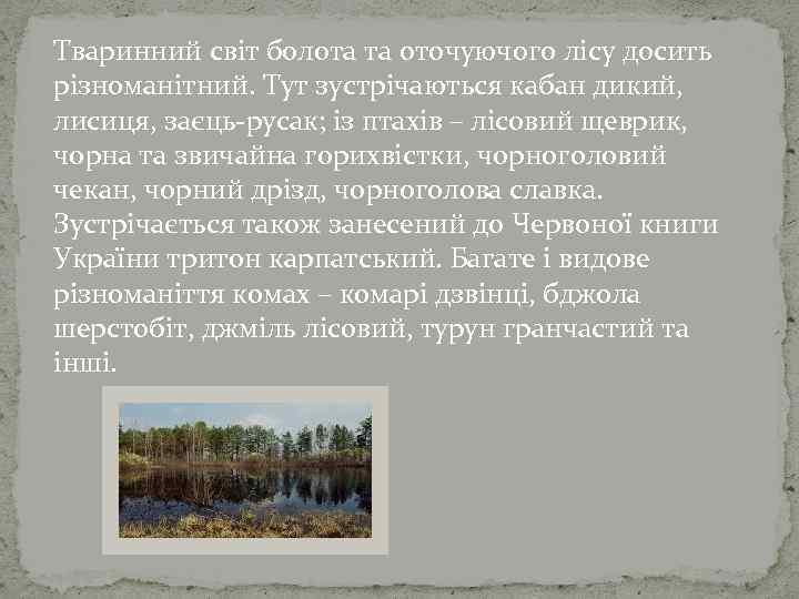 Тваринний світ болота та оточуючого лісу досить різноманітний. Тут зустрічаються кабан дикий, лисиця, заєць-русак;