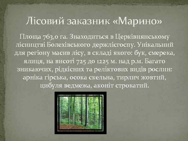 Лісовий заказник «Марино» Площа 763, 0 га. Знаходиться в Церківнянському лісництві Болехівського держлісгоспу. Унікальний