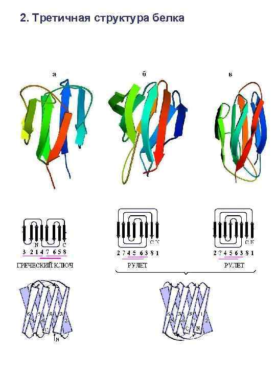2. Третичная структура белка