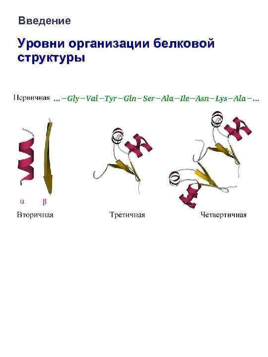 Введение Уровни организации белковой структуры