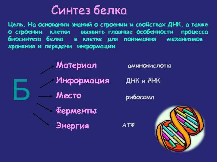 Синтез белка Цель. На основании знаний о строении и свойствах ДНК, а также о