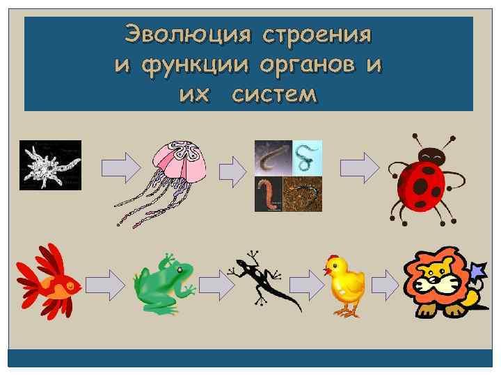 Эволюция строения и функции органов и их систем