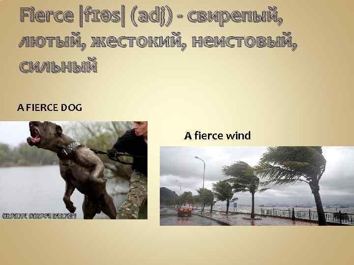Fierce |fɪəs| (adj) - свирепый, лютый, жестокий, неистовый, сильный A FIERCE DOG A fierce