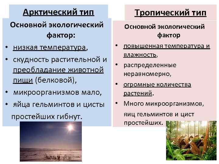 Арктический тип Основной экологический фактор: • низкая температура, • скудность растительной и преобладание животной