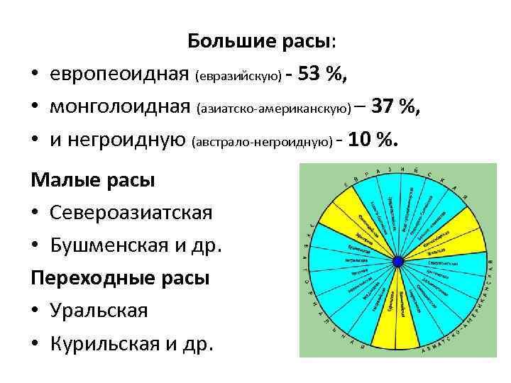 Большие расы: • европеоидная (евразийскую) - 53 %, • монголоидная (азиатско-американскую) – 37 %,