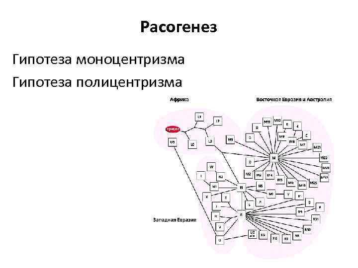 Расогенез Гипотеза моноцентризма Гипотеза полицентризма