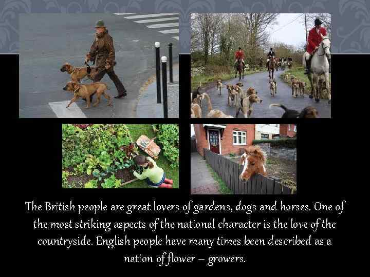 The British people are great lovers of gardens, dogs and horses. One of the