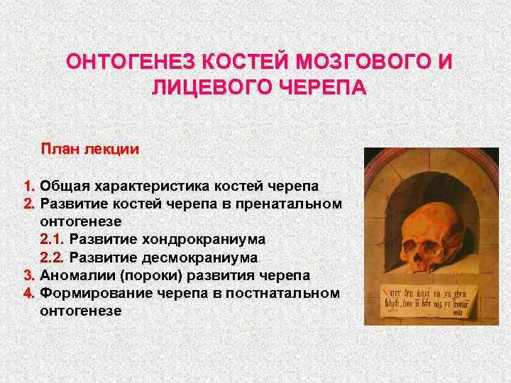 ОНТОГЕНЕЗ КОСТЕЙ МОЗГОВОГО И ЛИЦЕВОГО ЧЕРЕПА План лекции 1. Общая характеристика костей черепа 2.