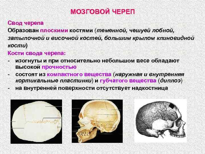 МОЗГОВОЙ ЧЕРЕП Свод черепа Образован плоскими костями (теменной, чешуей лобной, затылочной и височной костей,