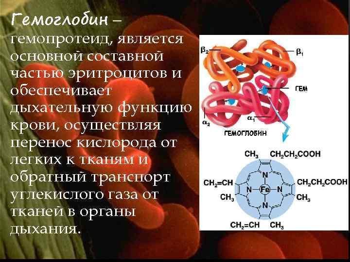 Гемоглобин – гемопротеид, является основной составной частью эритроцитов и обеспечивает дыхательную функцию крови, осуществляя