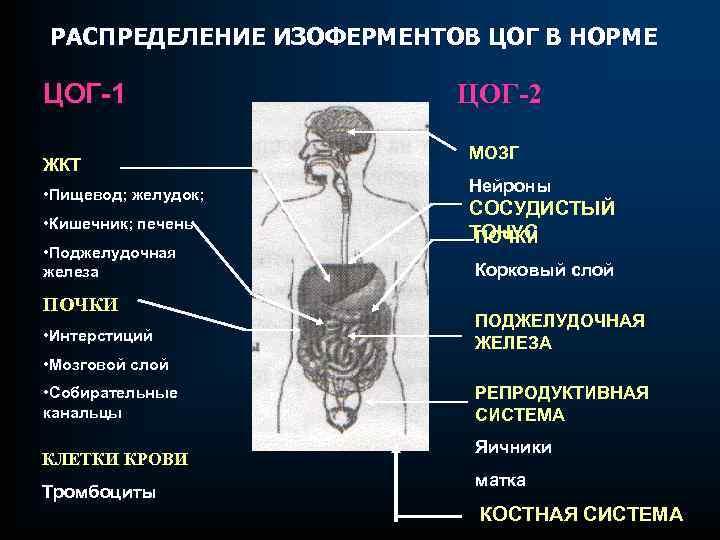 РАСПРЕДЕЛЕНИЕ ИЗОФЕРМЕНТОВ ЦОГ В НОРМЕ ЦОГ-1 ЖКТ • Пищевод; желудок; • Кишечник; печень •