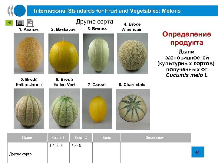 International Standards for Fruit and Vegetables: Melons 1. Ananas 5. Brodé Italien Jaune Дыни
