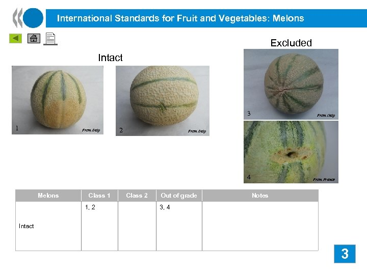 International Standards for Fruit and Vegetables: Melons Excluded Intact 3 4 1 From Italy